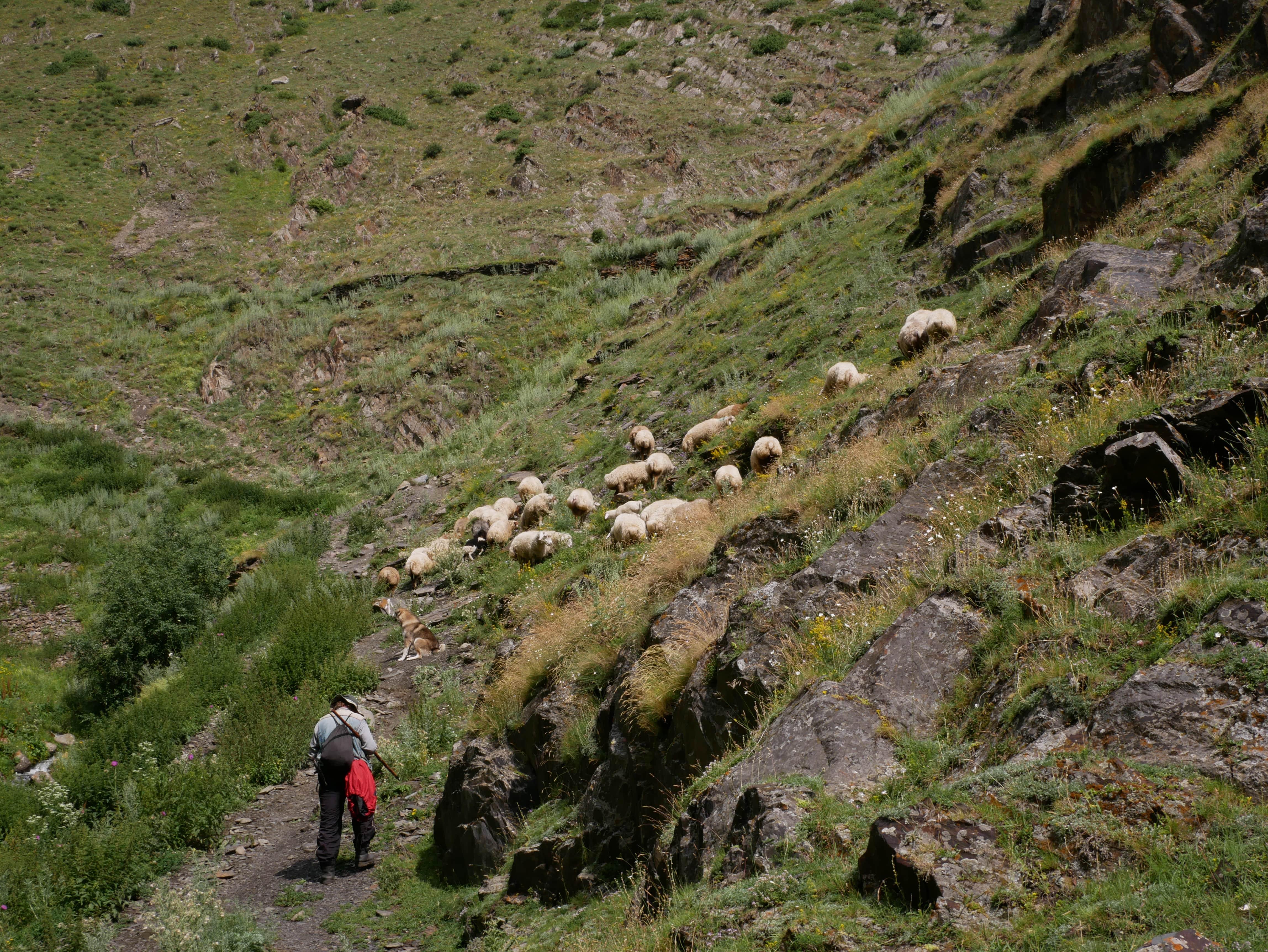 Un berger et ses moutons dans la montagne de Kazbegi